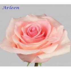 Arleen