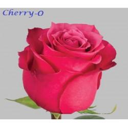 Cherry O