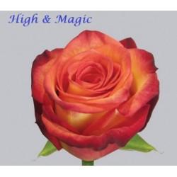 High Magic