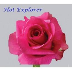 Hot Explorer