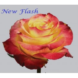 New Flash