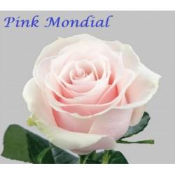 Pink Mondial