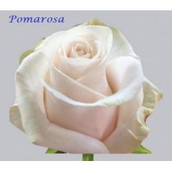 Pomarosa