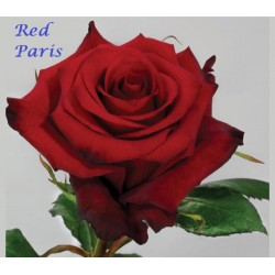 Red Paris