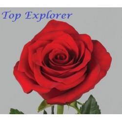 Top Explorer