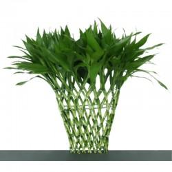 Bambou rectangulaire aprox...